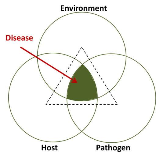 Name:  DiseaseFigure68.jpg Views: 579 Size:  20.3 KB