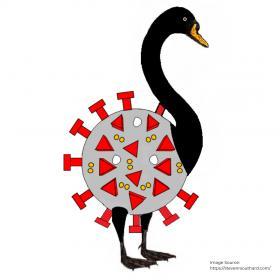 Name:  Black Swan Instagram.jpg Views: 2307 Size:  10.0 KB