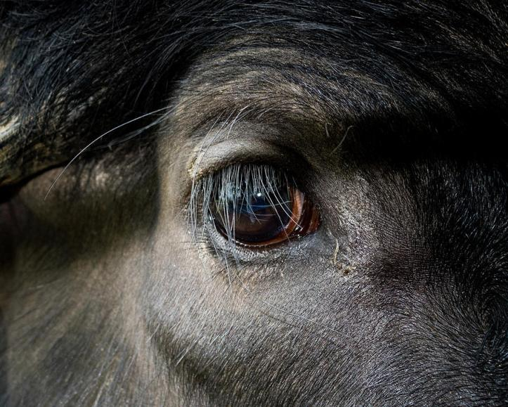 Name:  bulls-eye-stephen-g-black.jpg Views: 2400 Size:  98.9 KB