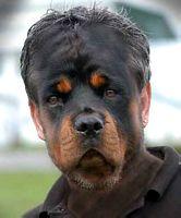 Name:  tn_dogface.jpg Views: 302 Size:  7.4 KB