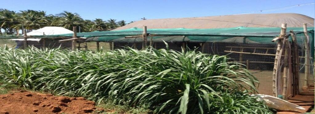 Name:  aka-country-chicken-farm-thirunagar-madurai-poultry-farms-1yuc3oy.jpg Views: 11 Size:  83.7 KB
