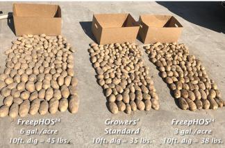 Name:  potato-1-freephos.jpg Views: 116 Size:  20.2 KB