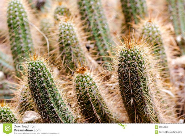 Name:  extreme-close-up-sharp-cactus-spikes-desert-plants-full-frame-horizontal-crop-89054093.jpg Views: 1535 Size:  100.3 KB