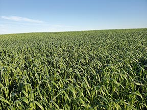 Name:  Baler oats field.jpg